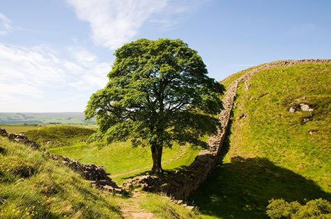 Sycamore Gap, Hadrian's Wall, Northumberland. (photographer unknown)